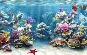 coral reef research papers Coral reef research paper introduction (homework helpers online) napisano w blog a test my post is pulled from an essay and sourced at the bottom yours is a meme w.