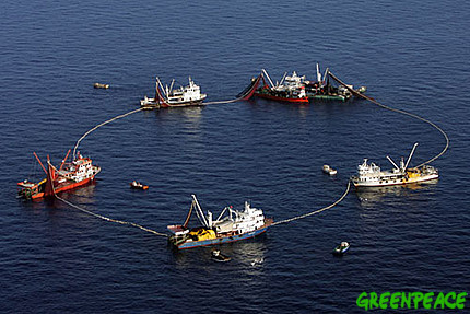 what is overfishing